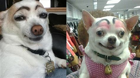 with eyebrows dogs with eyebrows are a comback ilovedogsandpuppies