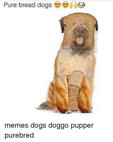 bread bad for dogs search puppers memes on me me