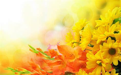 Wallpaper Kuning Bunga Besar background kuning bunga 7 background check all