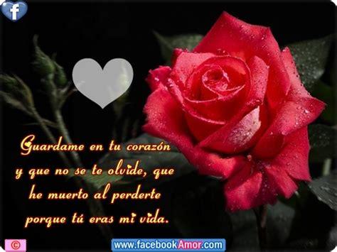 imagenes todo flores im 225 genes bellas de flores y lindos mensajes de amor para