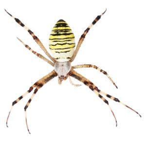 Garden Spider Legs Spiders In Mid Missouri