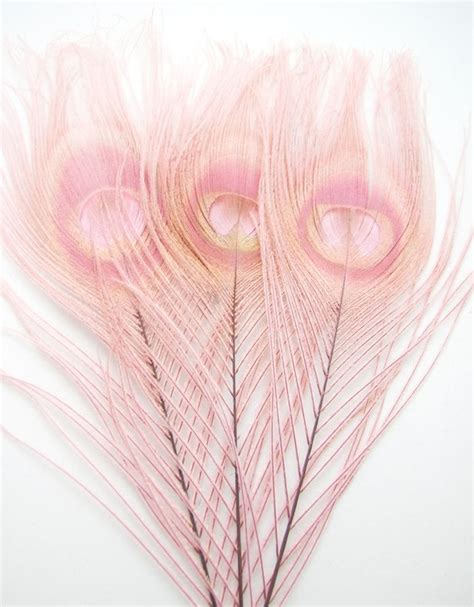 Syari Peacock Dusty Pink dusty pink peacock feather 2 size optionrf