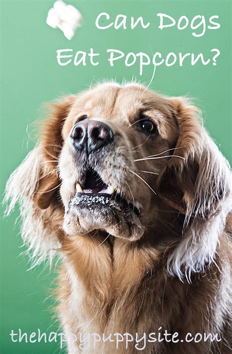 is popcorn for dogs can dogs eat popcorn a popcorn and dogs safety guide from the happy puppy site