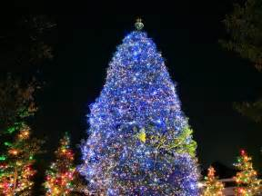 19 days until christmas beautiful christmas trees