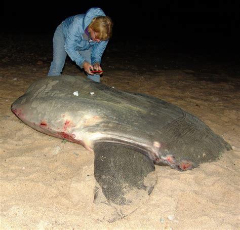 Iowa Simple Misdemeanor On Record Record Sunfish
