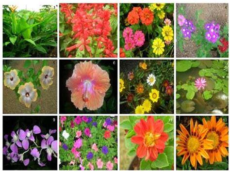 imagenes de flores ornamentales blog de martika