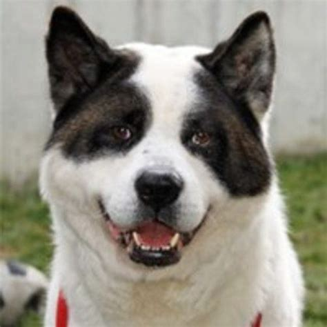 pet finders dogs petfinder pet photo rescues adoptions in need