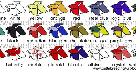 betta colors all about betta fish types of different color patterns in