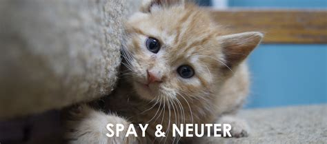 spay cost free and low cost spay and neuter listed by us state design bild