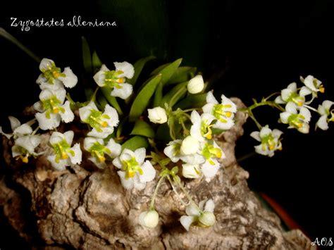 Dendro Hibiki el nou espai de l orquidi 242 fil p 225 81
