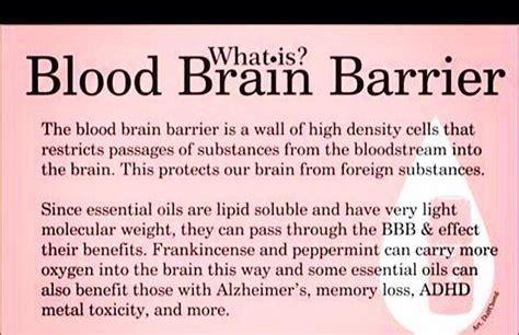 Detox Blood Brain Barrier by What Is Blood Brain Barrier Trusper
