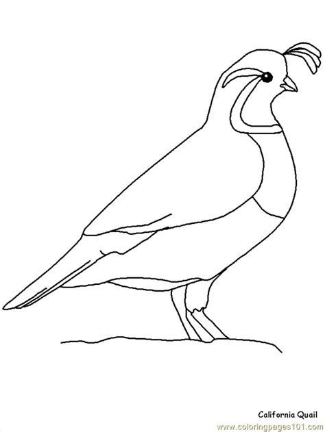 Free Coloring Page Quail by California Quail Coloring Page Free California Quail