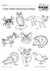 Galerry nocturnal animal coloring pages