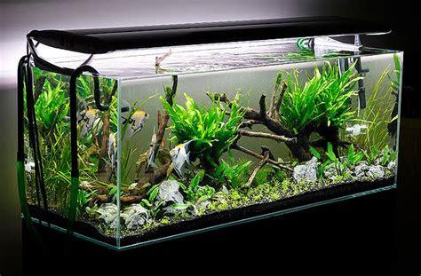 aquarium design a two sided live planted aquarium