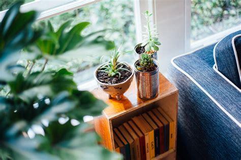 indoor plant dying 100 indoor plant dying inside home plants