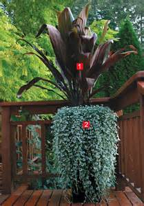 stylish shady containers fine gardening