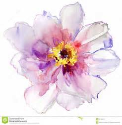 water color flowers watercolor white flower stock image image 31150611