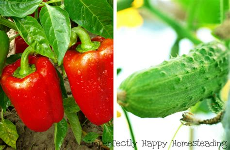what to plant in vegetable garden now what to plant in july in your vegetable garden now