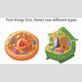 Animal cell diagram not labeled with color infrastructurafo animal cell diagram not labeled with color cells cells p ccuart Image collections