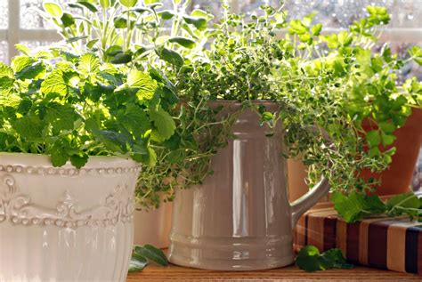 kitchen herb how to get the most mileage out of your herb garden