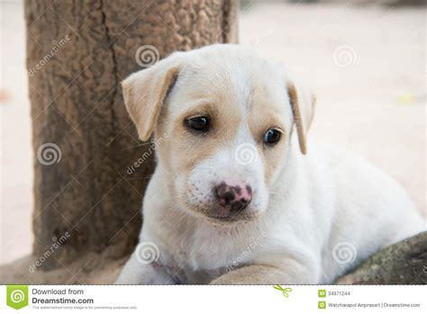 lonely puppy lonely stock images image 34971244