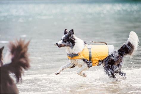 zwemvest hond verplicht hurtta zwemvest life savior dierenshop nl