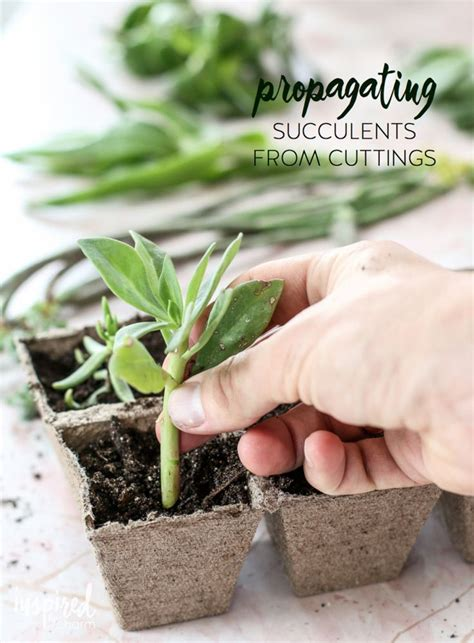 Propagating Succulents Succulents And Plants On - succulent propagation home charms and plants