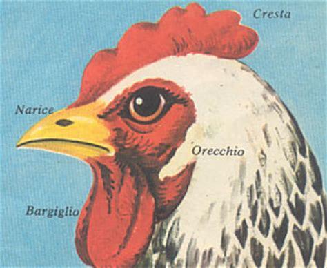 testa di gallo il gallo