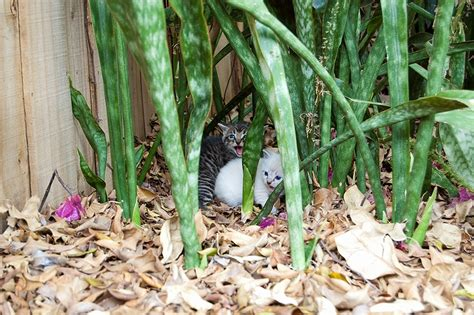 stray kittens in backyard stray kittens in backyard 28 images stray cats and