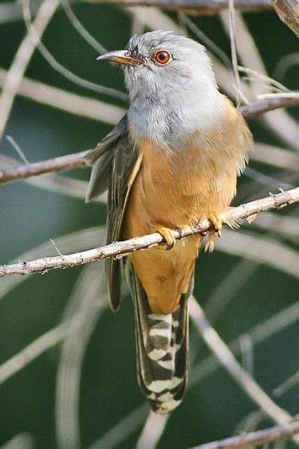 download mp3 suara adzan indonesia download suara burung tutuit atau kedasih gacor mp3