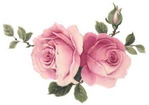 shabby chic roses 17 best images about roses on cabbage roses