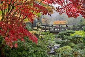 japanese maple trees by the bridge in fall photograph by