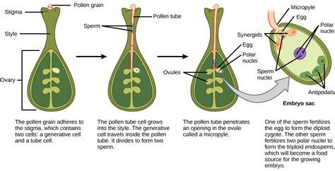 fruit definition biology plant reproduction biology 1520
