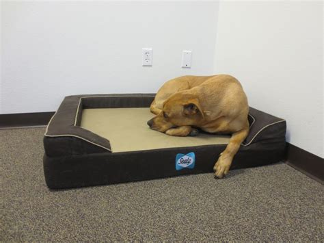 sealy dog bed 27 best cuties on a sealy dog bed images on pinterest