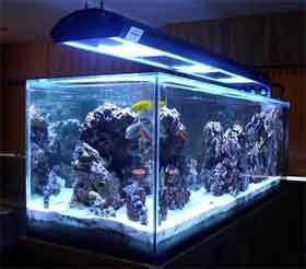 is blue led light harmful to fish aquarium lighting guide