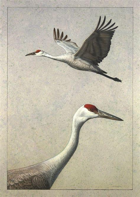 crane painting sandhill cranes painting by w johnson