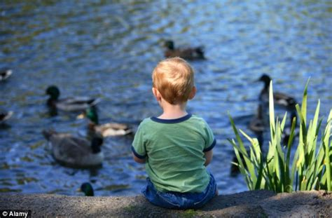 quack cocaine charity warns not to feed ducks bread as