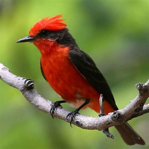 imagenes animales aves im 225 genes de aves para descargar im 225 genes para descargar