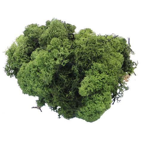 dark green reindeer moss 500g easy florist supplies