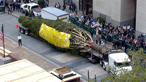 tree lighting rockefeller center rockefeller center tree arrives on the plaza