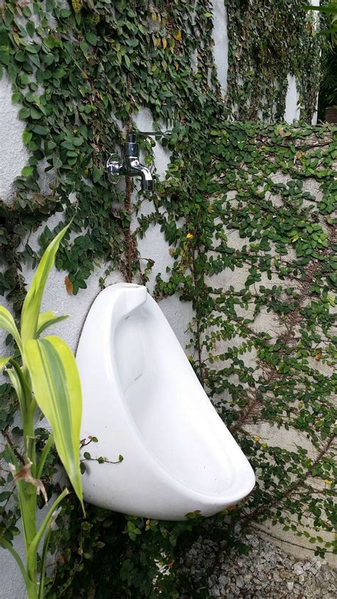 outdoor urinal   tap  flushing urinal backyard