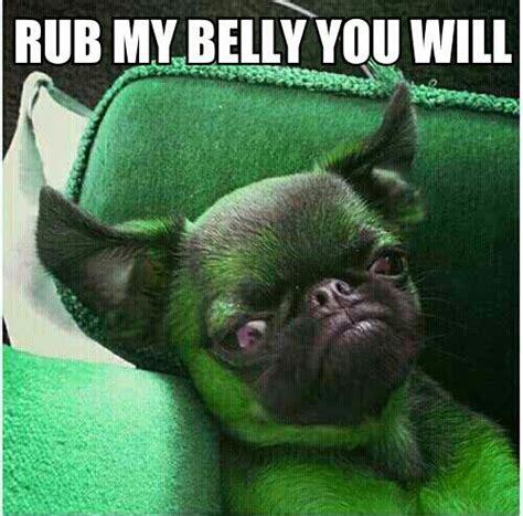 evil pug evil green pug dogs