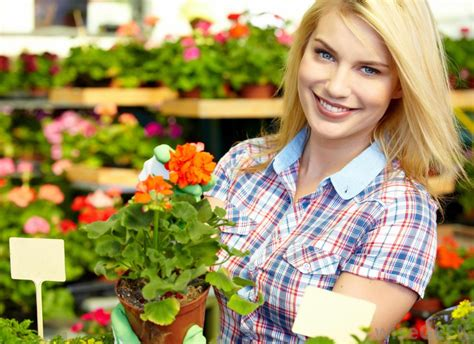 woman working in a nursery greenhouse with colorful flowers stock