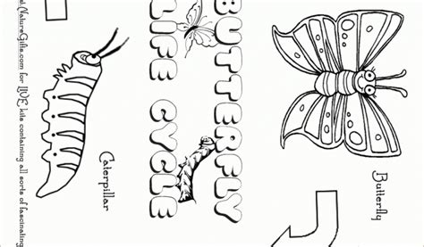 coloring pages for butterfly life cycle coloring page simple version coloring pages for