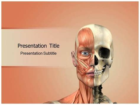 face anatomy powerpoint templates authorstream