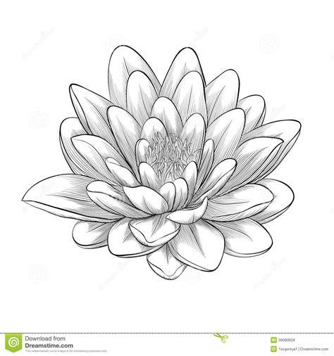 lotus tattoo zwart wit flor de loto dibujo blanco y negro buscar con google