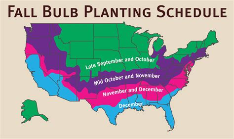 fall garden planting schedule fall is bulb planting time for some varieties