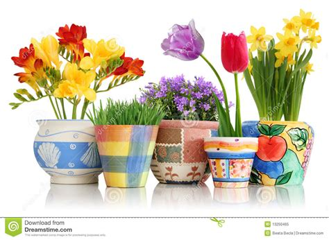 images of 6 flowers in pots flowers in pots royalty free stock photo image 13250465