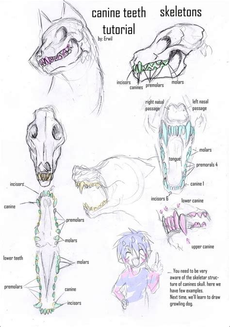 werewolf drawing tutorial werewolf skeletal stuff werewlf pinterest werewolves