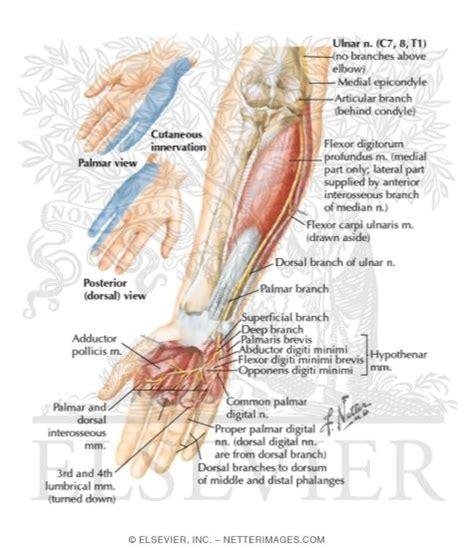 Bor Radial radial nerve impingement search interesting